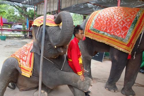 象使いと小僧の戯れ