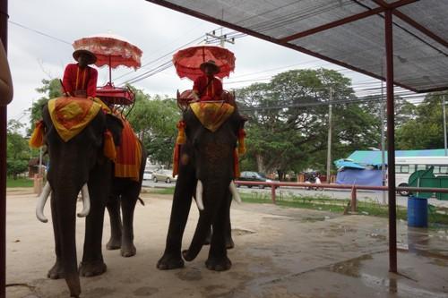 次の乗客を乗せるために待機している象