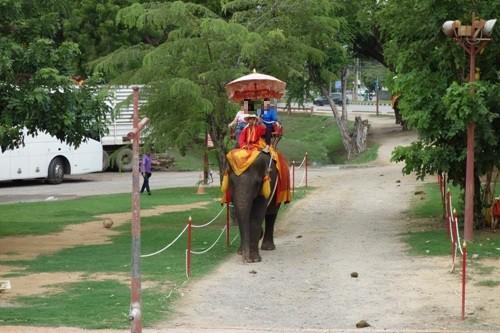 象に乗るツアー客