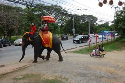 コースアウトして車道を疾走する象