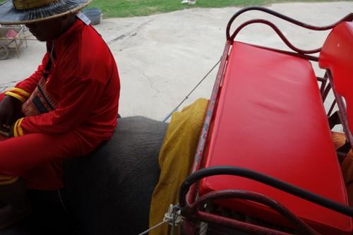 象の背中に設置された赤色の革製ベンチシート