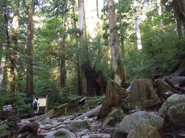 巨大な樹木や岩が並ぶトレッキングコース