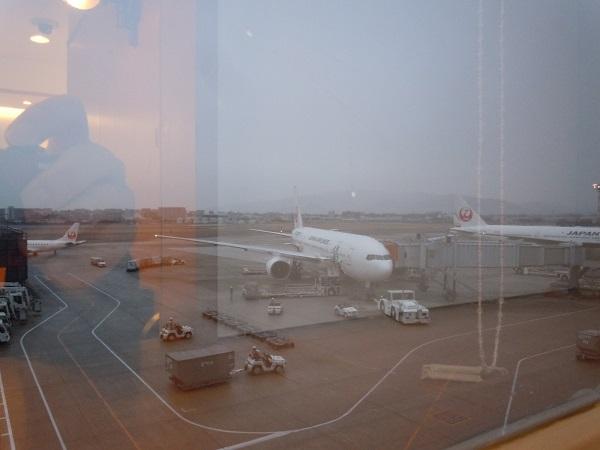 サクララウンジからの伊丹空港駐機場の景色