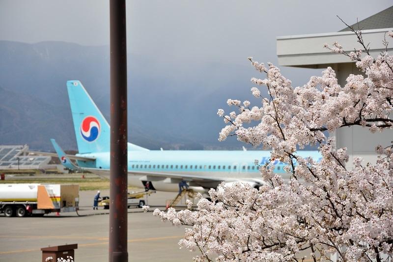 桜と大韓航空機